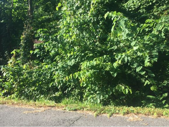 0 Highland Road, Jonesborough, TN 37659 (MLS #408409) :: Conservus Real Estate Group