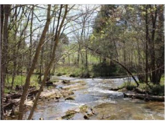 983 Fall Creek Rd, Kingsport, TN 37617 (MLS #409955) :: Conservus Real Estate Group