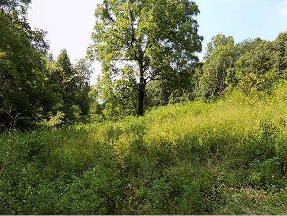 tbd S. Bear Hollow, Rogersville, TN 37857 (MLS #410865) :: Highlands Realty, Inc.