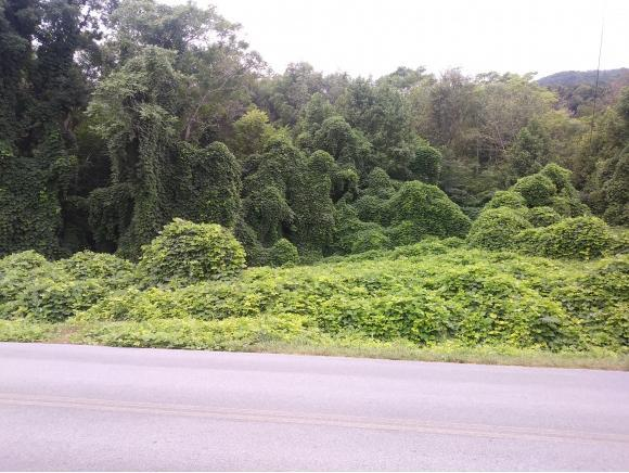TBD Bill Garland Rd., Johnson City, TN 37601 (MLS #412185) :: Griffin Home Group