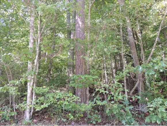 Tract 2 Spruce Pine Road, Rogersville, TN 37857 (MLS #412854) :: Griffin Home Group
