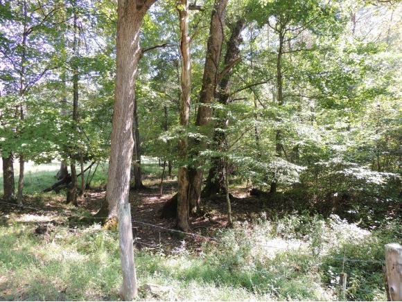 Tract 5 Spruce Pine Road, Rogersville, TN 37857 (MLS #412867) :: Griffin Home Group