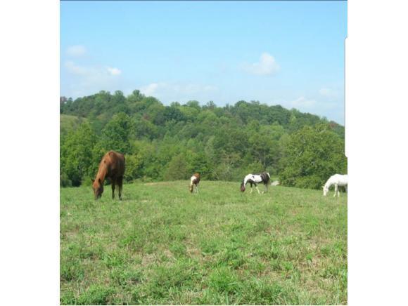 920 North Chapel Rd, Parrottsville, TN 37843 (MLS #414653) :: Conservus Real Estate Group