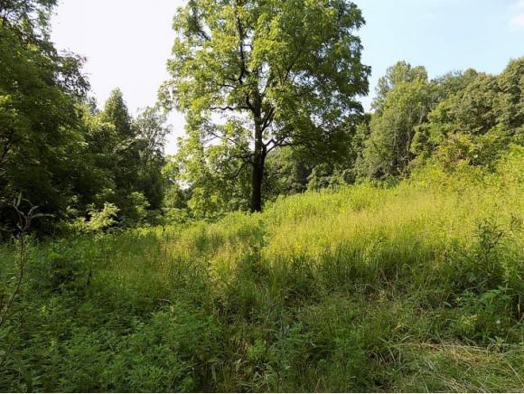 TBD S. Bear Hollow, Rogersville, TN 37857 (MLS #417757) :: Highlands Realty, Inc.