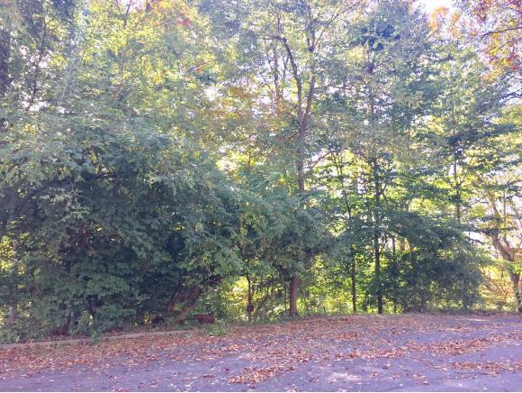 121 Sequoia Lane, Bristol, TN 37620 (MLS #424931) :: Conservus Real Estate Group