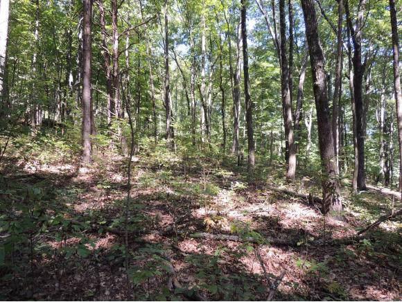 000 Hwy 66, Rogersville, TN 37857 (MLS #427164) :: Highlands Realty, Inc.
