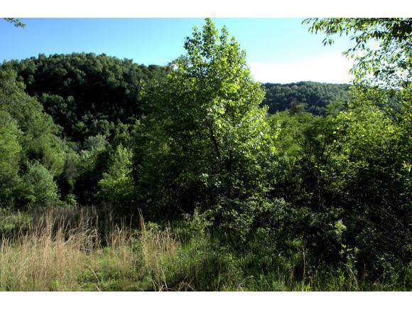 205 Combs Hollow Rd, Cumberland Gap, TN 37724 (MLS #427199) :: Conservus Real Estate Group