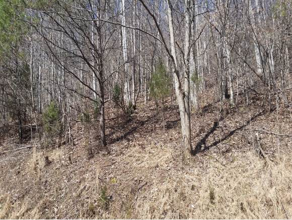Lot 124 Chimney Rock Rd, New Tazewell, TN 37825 (MLS #427513) :: Conservus Real Estate Group