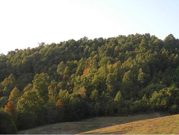 002B Dingus Hollow Rd, Ft Blackmore, VA 24250 (MLS #428660) :: Conservus Real Estate Group