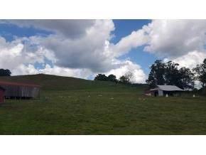 4317 Island Road, Bristol, TN 37620 (MLS #9902045) :: Highlands Realty, Inc.