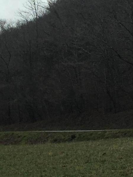 Tbd 45 Acres War Creek Road - Photo 1