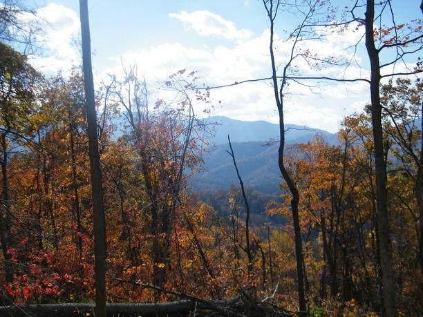 Tbd Hampton Creek Road, Roan Mountain, TN 37687 (MLS #9906589) :: Bridge Pointe Real Estate