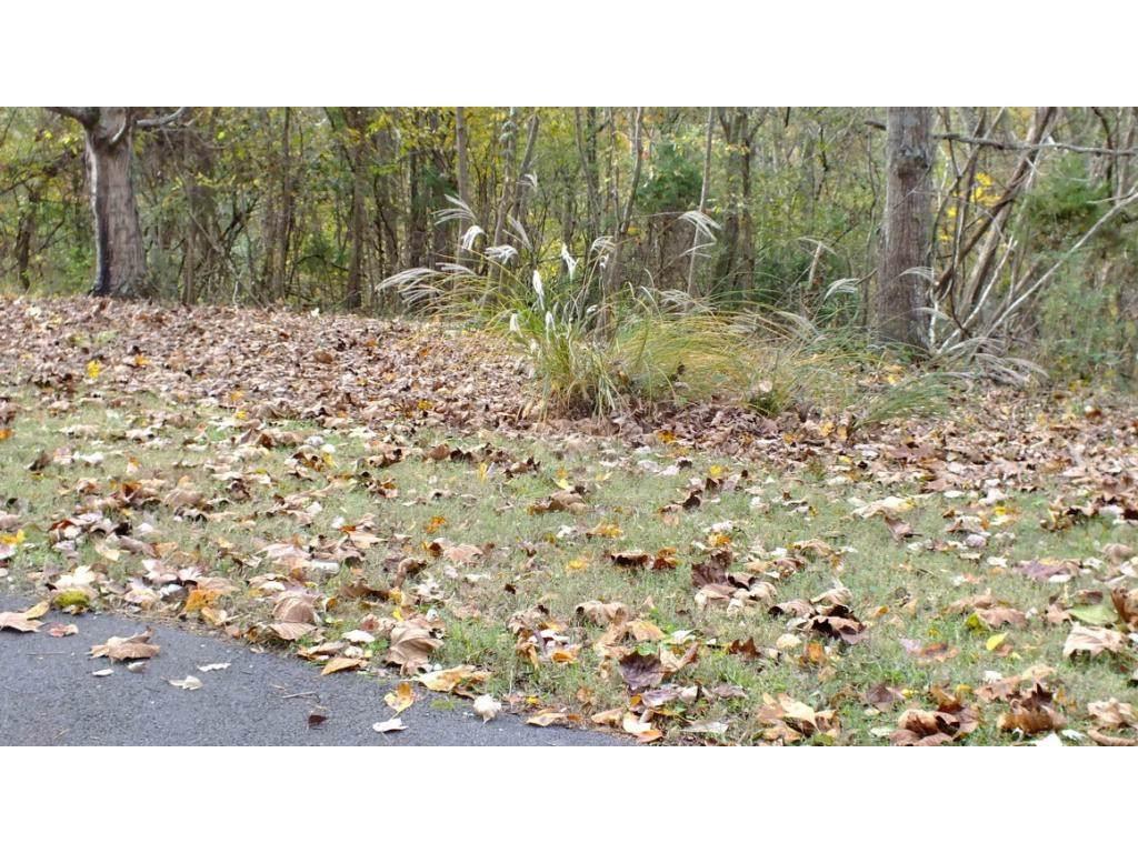 0 Surgoinsville Creek Road - Photo 1