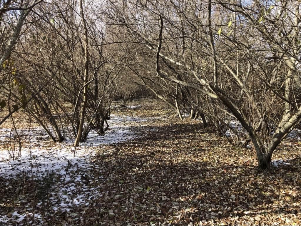 Lot 12 Hidden Acres - Photo 1