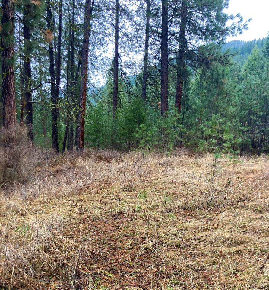 TBD Hwy 25 & Marcus Campground Rd - Photo 1