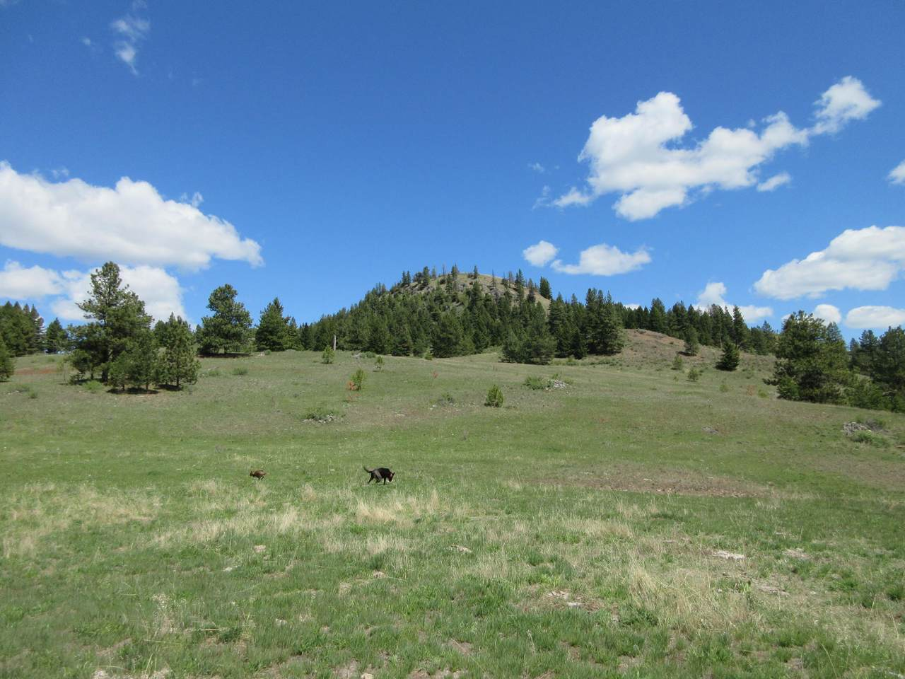 TBD Old Stage Rd - Photo 1