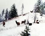 LOT 4 Schlegel Ranch Rd - Photo 9