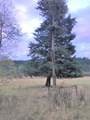 454 N Barnaby Creek Rd - Photo 14
