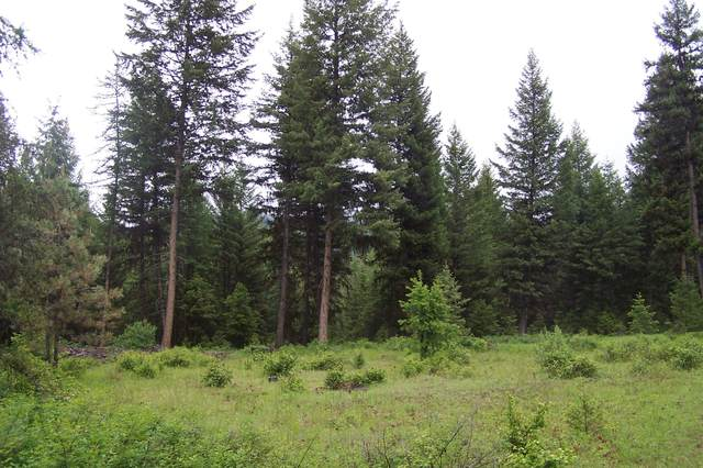 TBD Aeneas Creek Rd, CURLEW, WA 99118 (#38425) :: The Spokane Home Guy Group