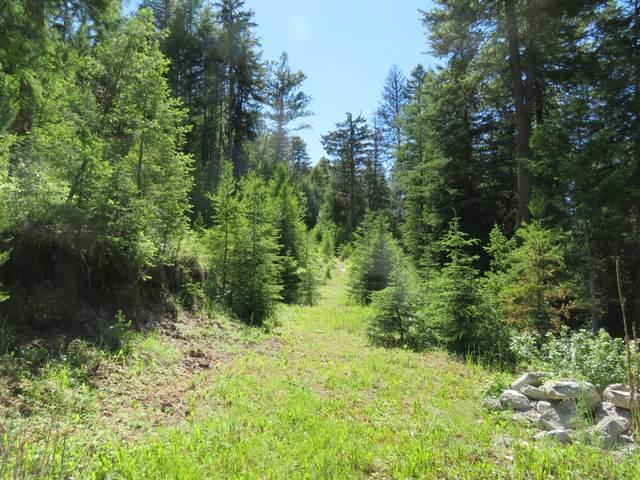 78 East Fork Cougar Creek Rd, WAUCONDA, WA 98859 (#39811) :: The Spokane Home Guy Group