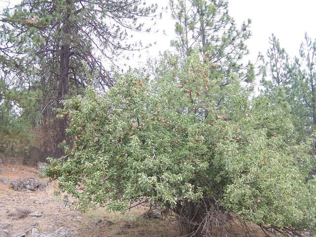 95X Kitt Narcisse Rd, COLVILLE, WA 99114 (#40457) :: The Spokane Home Guy Group