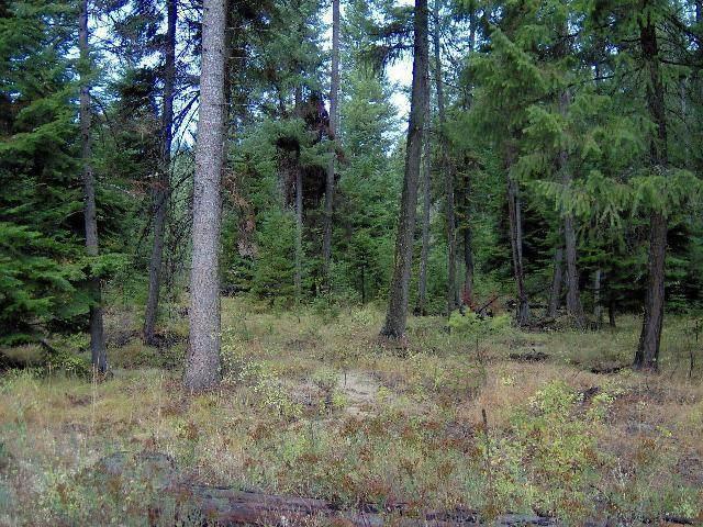 2673TBD Clark Lake Rd, ADDY, WA 99101 (#38884) :: The Spokane Home Guy Group