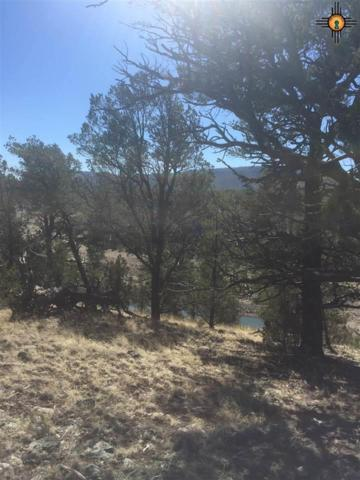 21 Rodeo Drive, Quemado, NM 87824 (MLS #20171114) :: Rafter Cross Realty