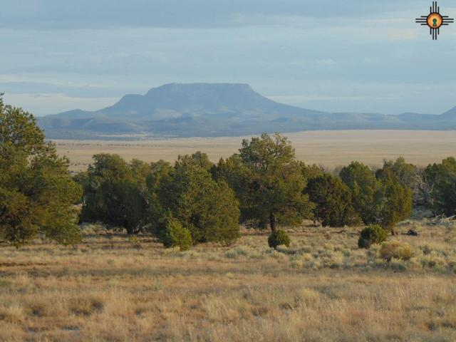 175 Bridal Path, Quemado, NM 87829 (MLS #20175747) :: Rafter Cross Realty