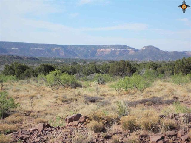 Tract 59 Bull Canyon Ranch, NEWKIRK, NM 88417 (MLS #20190063) :: Rafter Cross Realty