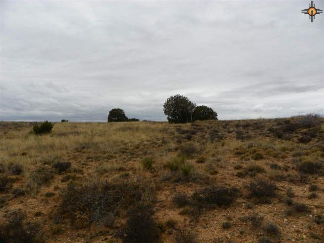 00 River Ranches Road, Fort Sumner, NM 88119 (MLS #20190705) :: Rafter Cross Realty