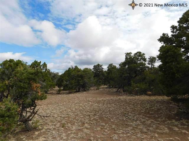 174 Agua Fria Loop, Quemado, NM 87829 (MLS #20213568) :: The Bridges Team with Keller Williams Realty