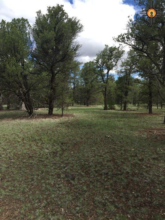 Crazy Horse Rd., Quemado, NM 87829 (MLS #20163876) :: Rafter Cross Realty