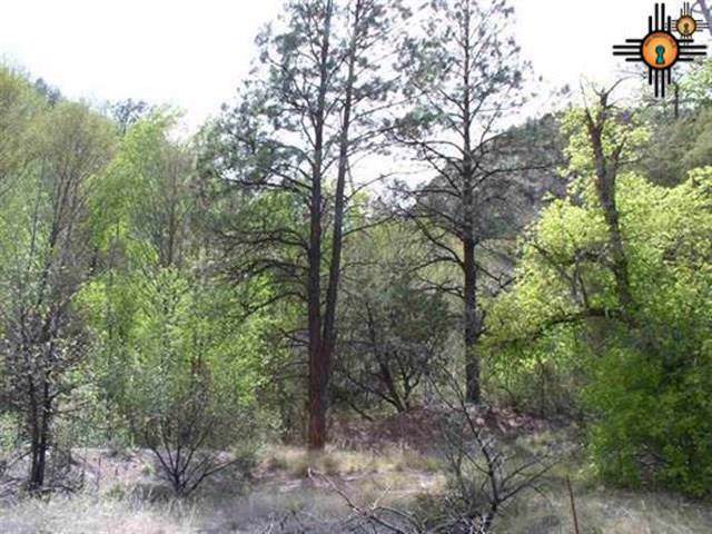 119 Saliz Canyon Rd., Reserve, NM 87830 (MLS #20195930) :: Rafter Cross Realty
