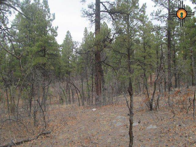 Lot 43 Forest Road 157 - Photo 1
