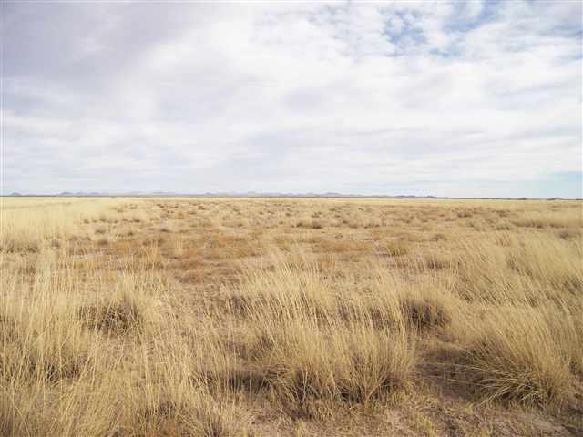 - Unit 13 Svr, Deming, NM 88030 (MLS #20115634) :: Rafter Cross Realty