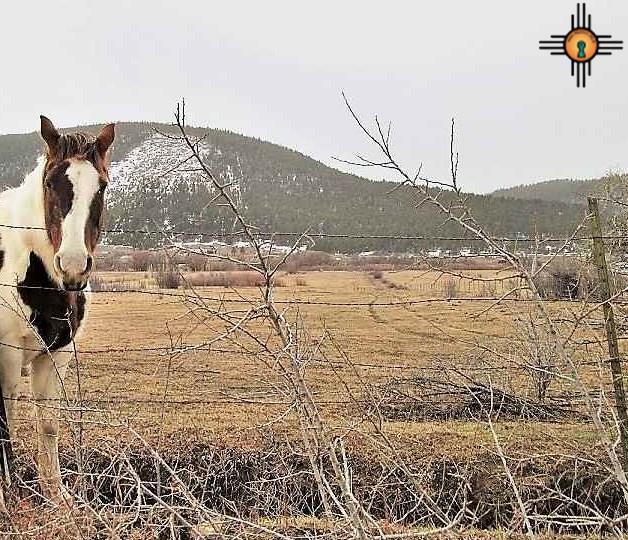 169 Cr B019, Cleveland, NM 87715 (MLS #20190681) :: Rafter Cross Realty
