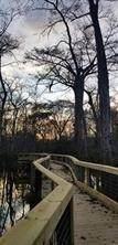 40216 Cypress Reserve Boulevard - Photo 8