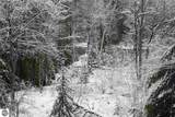 2450 Campfire Trail - Photo 37