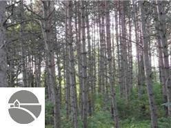 2134 Kodiak Trail, Kingsley, MI 49649 (MLS #1814073) :: CENTURY 21 Northland