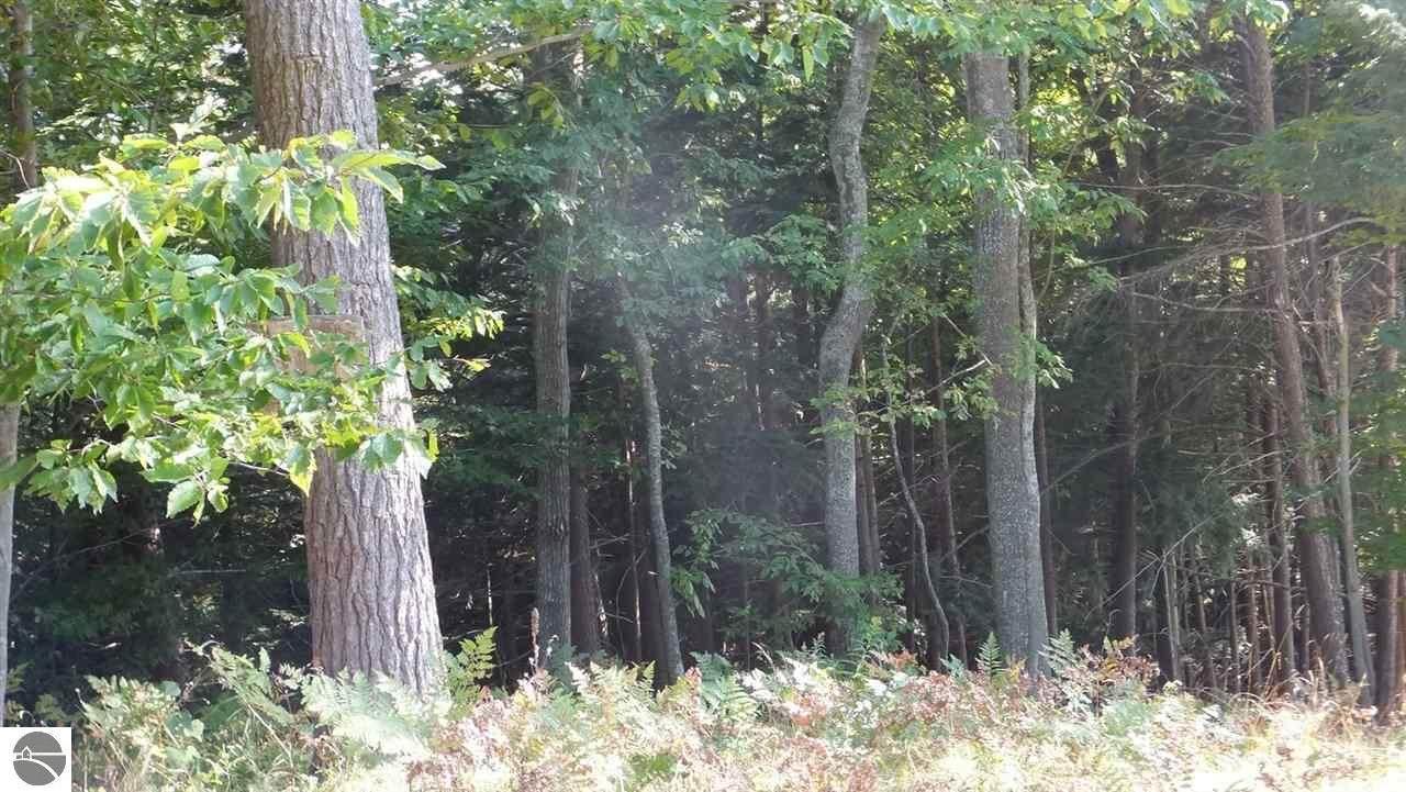 4 White Birch Trail - Photo 1
