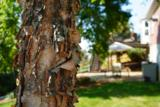 4194 Firewood Trail - Photo 38