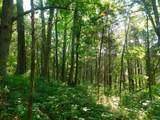 Fox Trail - Photo 22