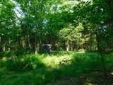 Fox Trail - Photo 9