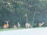 LOTS 926-927 Elk Lake Resort Rd - Photo 46