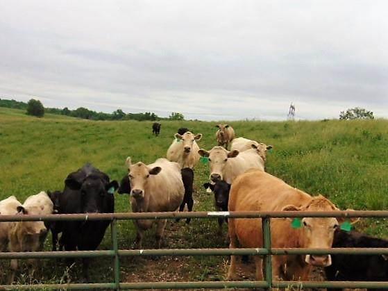 Jonesville Rd 32 +/- Acres - Photo 1