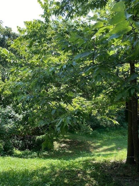 523 Frederick Lane, Newport, KY 41071 (#551650) :: The Susan Asch Group