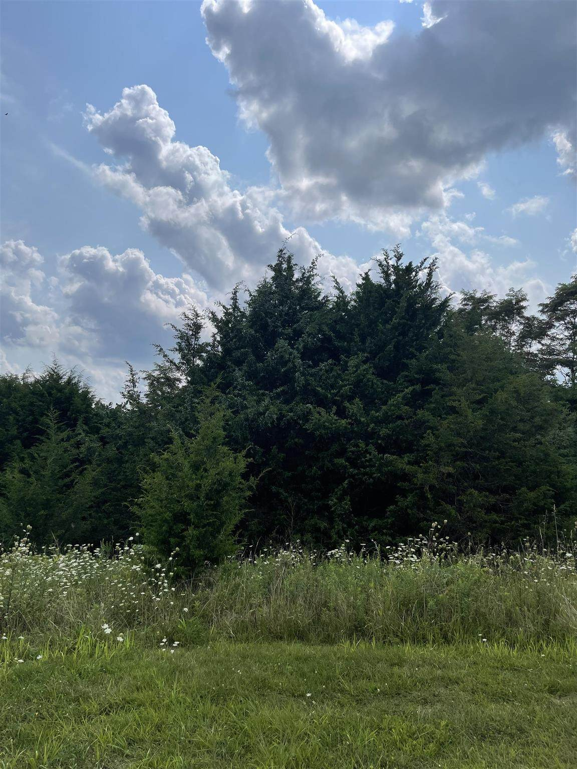 0 Bracken Hills - Photo 1