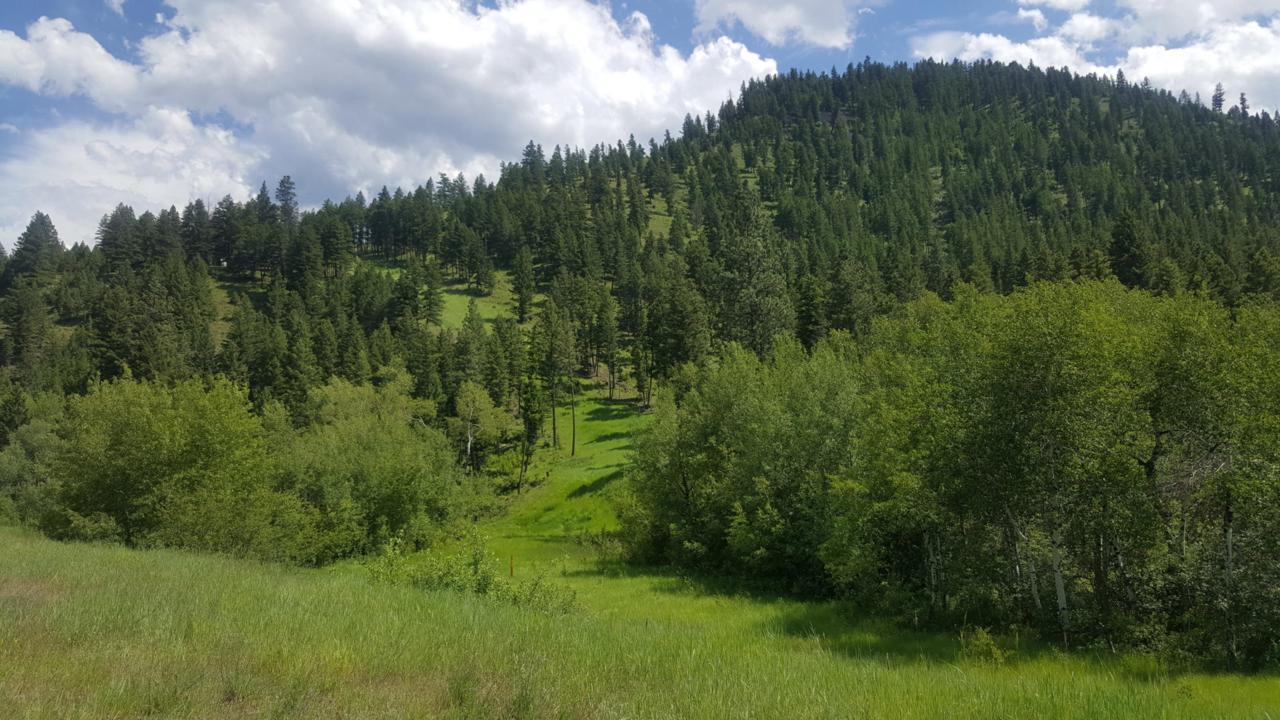 Tbd Bateman Creek Road - Photo 1