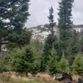 2306 Hidden Canyon Road - Photo 11