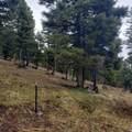 2306 Hidden Canyon Road - Photo 17